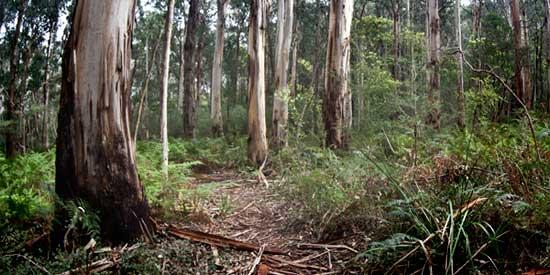 sclerophyll_forest (37K)