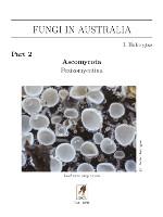 fia-2-asco-pezizo (9K)