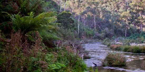 Thomson_river (31K)